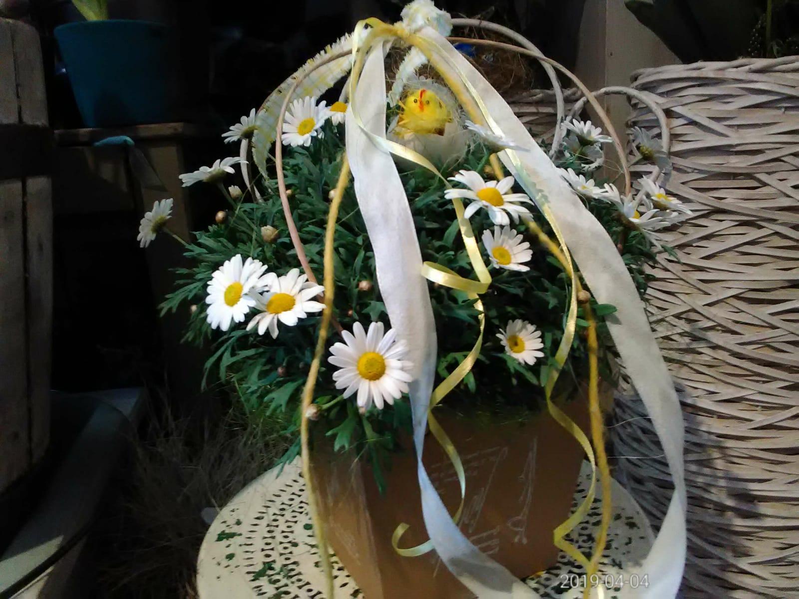 Piante Da Regalare A Pasqua pianta di margherite con decorazioni pasquali