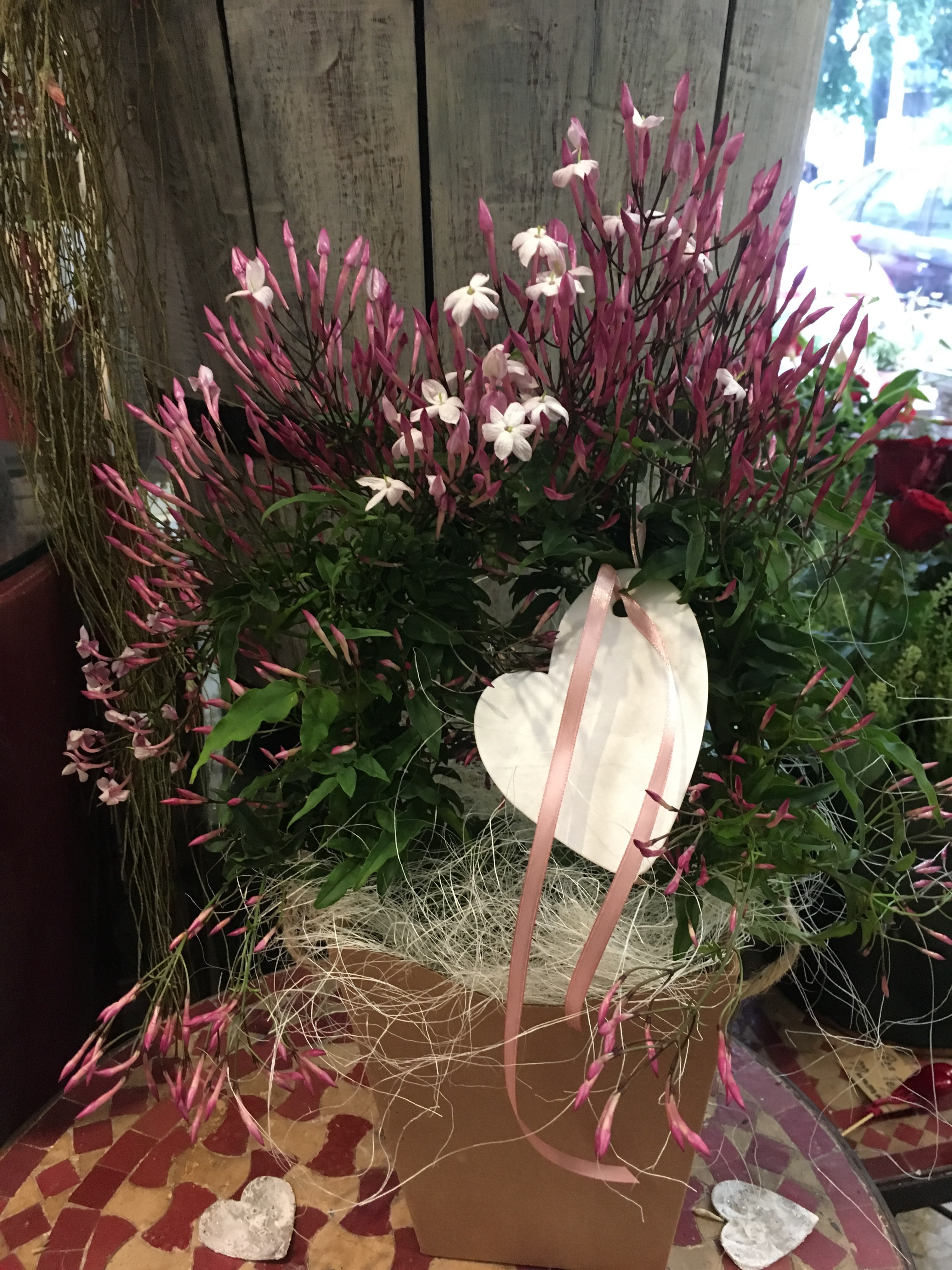 Piante Da Regalare A Pasqua pianta di gelsomino
