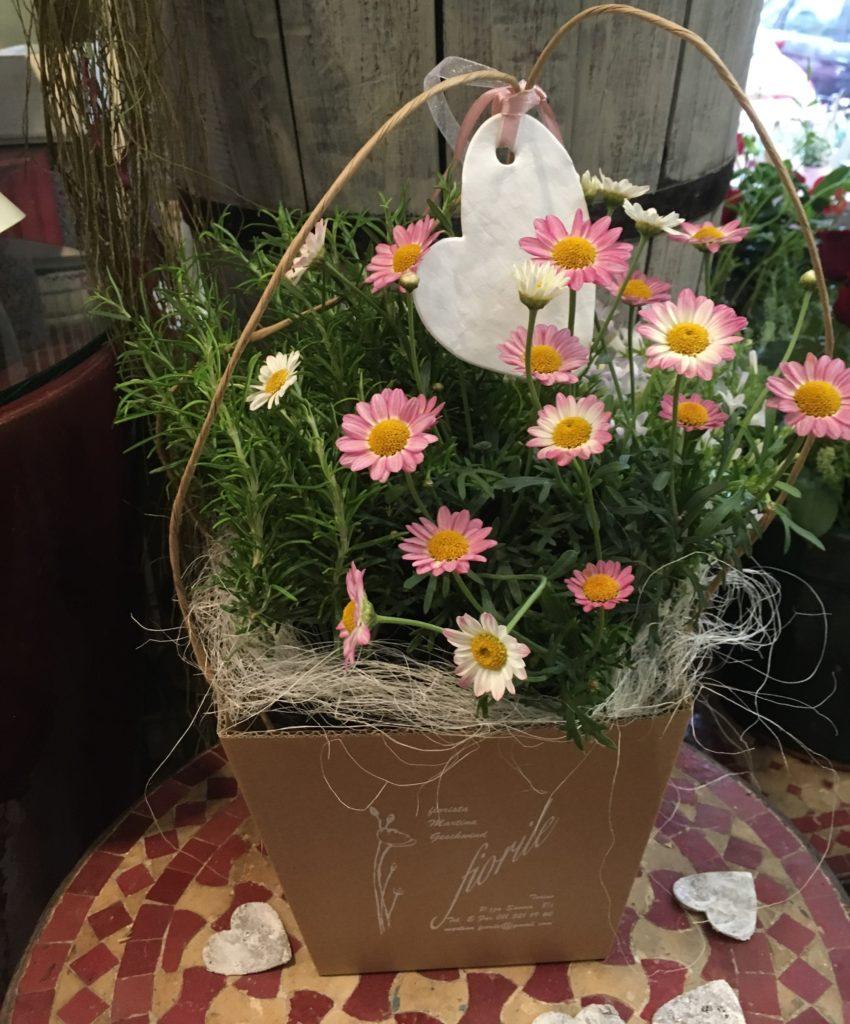 Piante Da Regalare A Pasqua mix di 3 piantine da esterno - ordina online su cosaporto