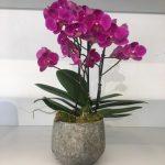 Orchidea in vaso di Maria Luisa Rocchi Flowers. a domicilio con cosaporto.