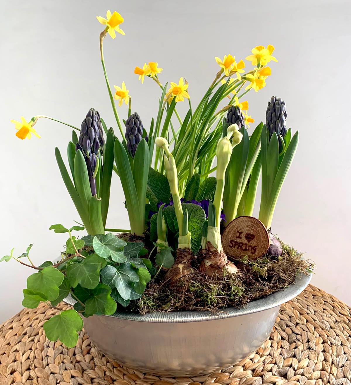 Che Cosa Sono I Bulbi composizione di piante e bulbi in vaso di latta - media/grande