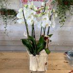 Tris di orchidee in vaso di vetro La Fioreria consegna a domicilio con Cosaporto